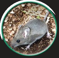 circle-mice