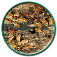 Termite Treatment in CT